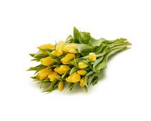 20 Tulpen