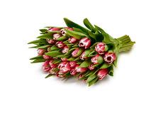 30 Tulpen