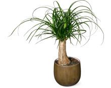Alle Grünpflanzen