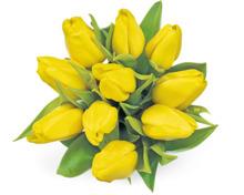 Alle M-Classic Tulpen im Bund, 10 Stück