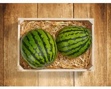 Baby Wassermelone