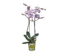 Coop Oecoplan Bio-Orchidee
