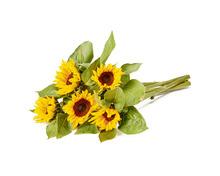 Coop Oecoplan Bio-Sonnenblumen