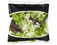 Denner Salanova Salat