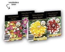 Exklusive Blumenzwiebeln