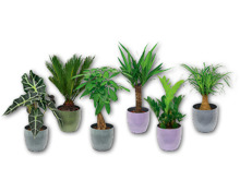 Exklusive Grünpflanze