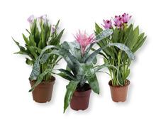Exotische Blühpflanze