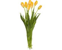 Französische Tulpen, Bund, 7 Stück