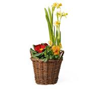 Frühlingskorb bepflanzt