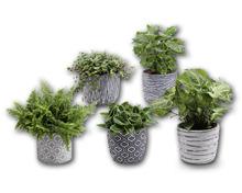 Grünpflanze in Trendkeramik