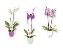 Orchidee in Keramik