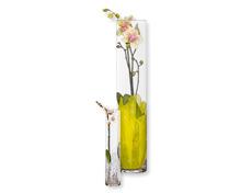 Orchideen bepflanzt im Glas