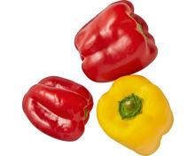 Peperoni gemischt