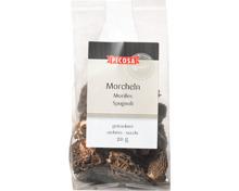 Picosa Morcheln