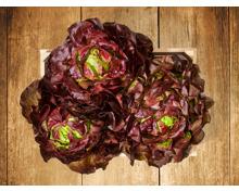 Roter Kopfsalat