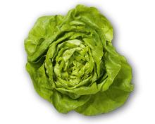 Schweizer Kopfsalat