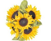 Sonnenblumen im Bund, 5 Stück