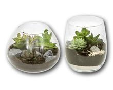 Sukkulenten im Glas