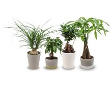 Tropische Grünpflanze