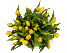 Tulpen, Bund, 25 Stück