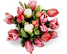 Tulpenfreude, Bund, 20 Stück
