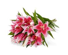 Coop Premium Lilien