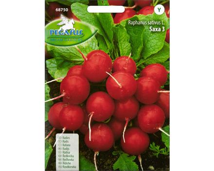 Gemüsesamen Radies Saxa