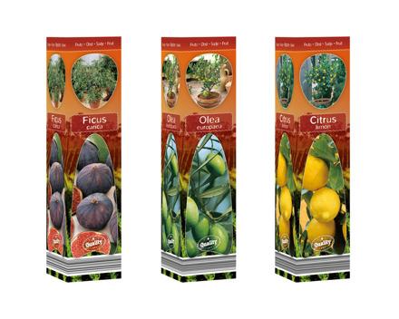 Mediterrane Pflanzen in Faltschachtel