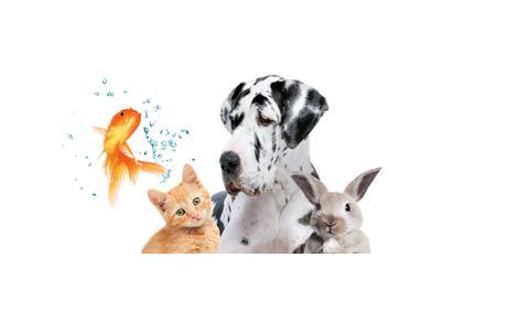 20% Rabatt auf Tierbedarf & Aquaristik-Sortiment