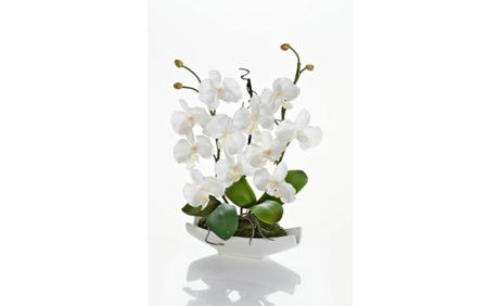 Orchideen arrangement weiss 31 rabatt weltbild ab - Orchideen arrangement ...