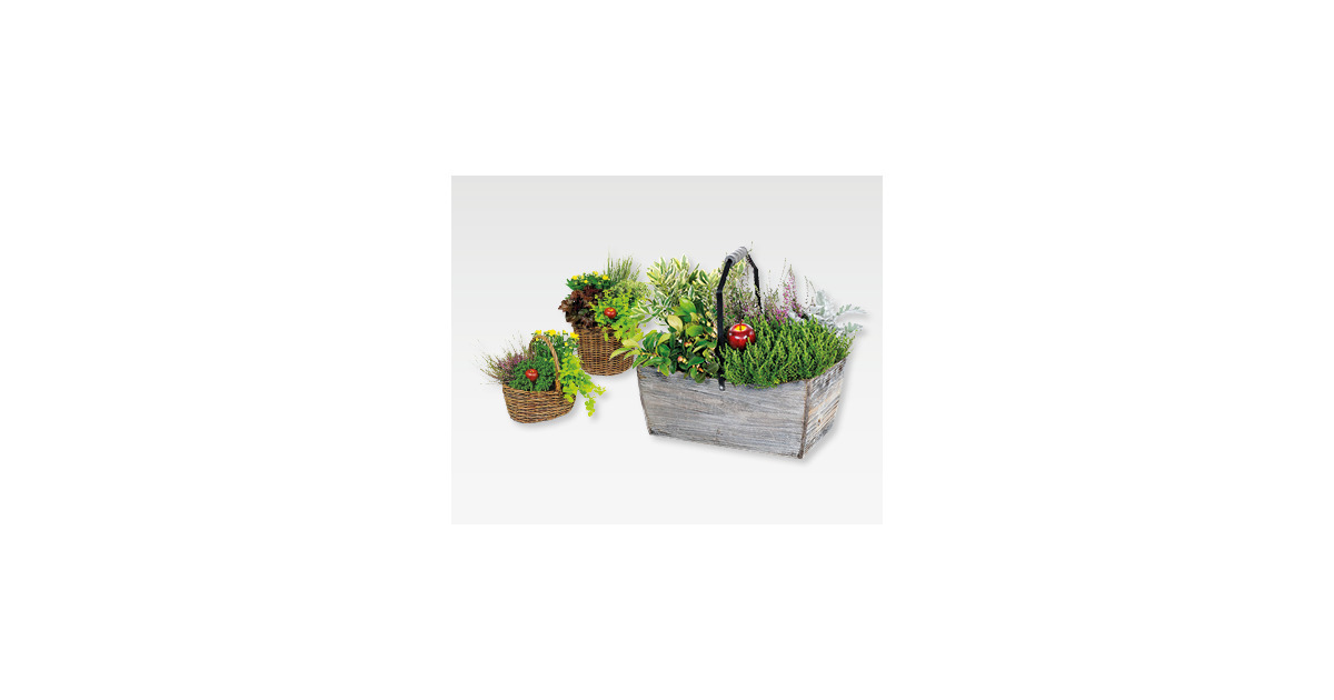 bepflanzte holzkiste weidenkorb aldi suisse ab. Black Bedroom Furniture Sets. Home Design Ideas