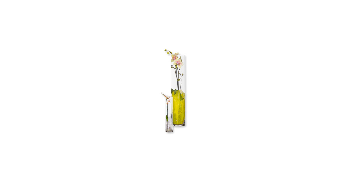 orchideen bepflanzt im glas aldi suisse ab. Black Bedroom Furniture Sets. Home Design Ideas